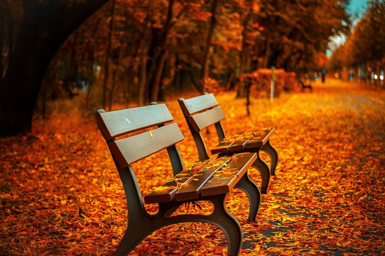 紅葉と絨毯のように敷き詰められた落ち葉とベンチの画像