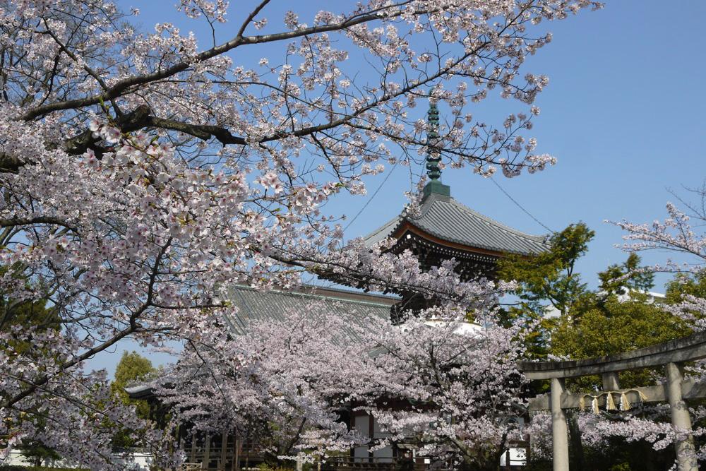 本法寺は日親により創建され、現在は京都の別の場所にあります