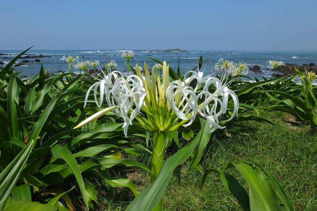 横須賀市の「天神島臨海自然教育園」から見える青い海と草花たち